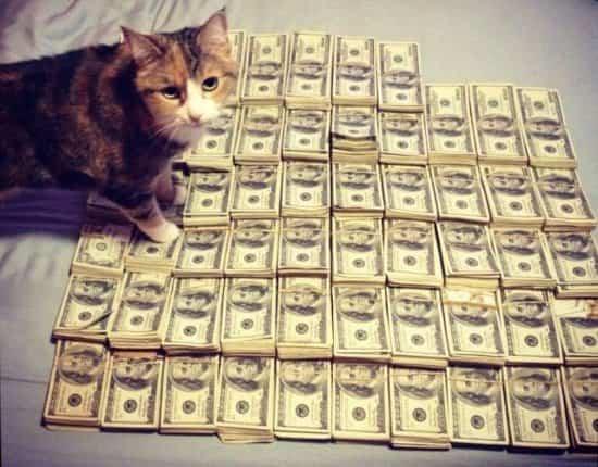 Заработок на Форекс - или как я заработал 700 долларов за 14 дней.