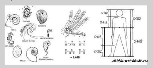 Роберт Фишер. Его книги - Новые методы торговли по фибоначчи и Приложения и стратегии Фибоначчи для трейдеров
