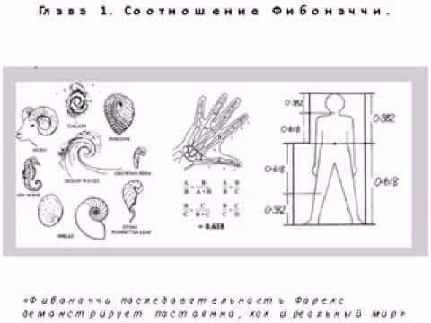 Последовательность Фибоначчи. Роберт Фишер, учение о применении вселенского знания на рынке